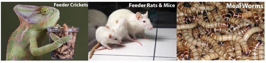 Fuzzies Feeder Mice Diet