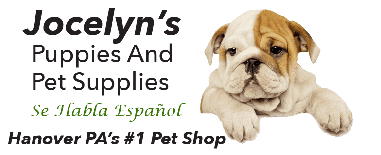 Jocelyn's Puppies, Pets & Supplies