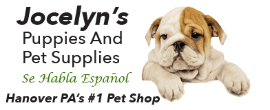Home - Jocelyn's Puppies, Pets & Supplies